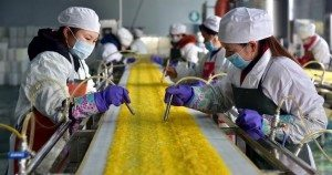 Employees work at a food processing factory in Yichang
